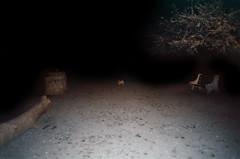 (Jacob Seaton) Tags: tree night bench pug lilly stump dogpark