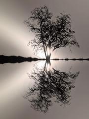 The burning tree (Nec Tamen Consumebatur) (kenny barker) Tags: tree monochrome sunrise reflections landscape lumix dawn scotland hypothetical landscapeuk panasonicg1 welcomeuk kennybarker