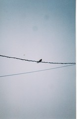 On the Line (Jag Scallion) Tags: summer bird film wire swallow agfa sensor optima agfaoptimasensorelectronichereandthere