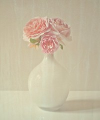 a schmaltzy moment (hanna.bi) Tags: pink roses white italia grace vogue vase abrahamdarby davidaustin hannabi annboleyn photovogue