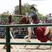 Renaissance Pleasure Faire 2012 061