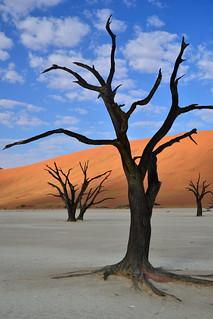 Deadvlei, tree in silhouette