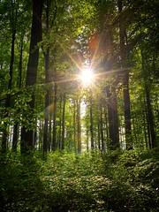 Sonne und Maigrn   Sun and green of May (Sebastian.Schneider) Tags: sun backlight germany deutschland hessen details sunburst sonne hdr highdynamicrange hdri gegenlicht sunstar photomatix tonemapped tonemapping ldk enhancer highdynamicrangeimage lahndillkreis sonnenstern lahndill