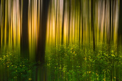 Forest abstract II (Dietrich Bojko Photographie) Tags: wood light abstract nature forest evening bravo experiment processing dietrichbojko