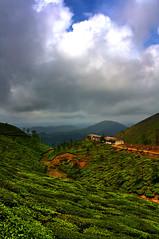 Tea Estate, Valparai (Sukanta Maikap Photography) Tags: india tamilnadu cloudysky mountainrange teaestate valparai canon1855mmf3556 sholayardam westernghat canon450d