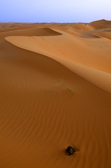 Althwairat Desert (SAUD ALRSHIAD 2  ) Tags: sky sahara nature lines composition landscape photography sand waves desert ngc shapes line saudi arabia sands curve riyadh 2012 landscap ksa saud saudia      zulfi flickraward arabin d7000  nikonflickraward azzulfi nikond7000 alrshiad  althwairat althwairatdesert