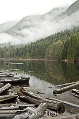 Lost Lake (AlpineEdge) Tags: trees mist canada water clouds forest britishcolumbia logs fresh driftwood bookcover northvancouver lostlake metrovancouver lowerseymourconservationreserve