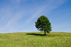 Tree on the Tallgrass Prairie Preserve (photographyguy) Tags: oklahoma nature grass hill bluesky prairie preserve tallgrass pawhuska