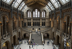 (drfugo) Tags: windows light building london glass statue architecture bricks darwin stained staircase naturalhistorymuseum diplodocus sigma28mmf18exdg