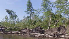 Trees in all directions (Dave Garvin) Tags: trip river canoe damage tornado huron
