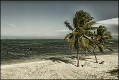 Cuba_2014_04_0133_IMG_1448 (_SG_) Tags: blue sunset holiday seascape reflection tree beach water stone strand palms boat wasser sonnenuntergang urlaub cuba palm insel steine caribbean blau spiegelung ferien palme kuba karibik republicofcuba republikkuba