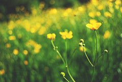 Spring (Sareni) Tags: flowers light flower colors grass spring bokeh may slovenia slovenija mate mb maribor filed 2010 twop trava prolece boje svetlost sareni
