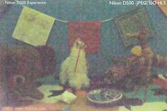 DSC_2950-Hi5-JPEG (dojoklo) Tags: test digital book high nikon raw nef iso tricks example experience howto tips setup guide manual dynamicrange noise setting jpeg compare d500