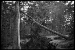 2016-April-23th_Porkkala_Yashica-Electro_063 (Tatu Korhonen) Tags: finland kirkkonummi porkkala yashicaelectro35professional yashinondx1745mm