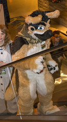 _DSC3640 (Acrufox) Tags: midwest furfest 2015 furry convention december hyatt regency ohare rosemont chicago illinois acrufox fursuit fursuiting mff2015