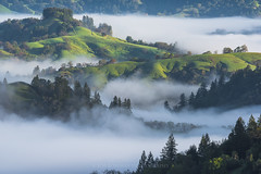 For The Love Of Fog (Bob Bowman Photography) Tags: california morning trees green fog sunrise hills sonomacounty redwoods norcal