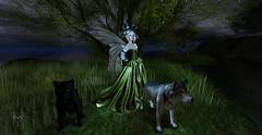 Frisland Fairy (Deva Westland) Tags: sl fantasy secondlife wolves faerie fae zoobys frisland