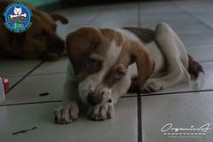 DSC08180 (OrgNicAmb) Tags: dogs perros nicaragua refugio mascotas masaya peluditos recataditos casahogarlucito orgnicamb