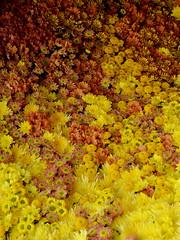 Floral art (bathyporeia) Tags: flower art belgium gent floralart hanshillewaert floralin2016