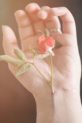 Trnendes Herz (Gret B.) Tags: selfportrait flower self hand blume blte ich blut pastell selbstportrt schmerz trauer traurig trnendesherz 52weeks ernhren 52weeksproject 52wochen 52wochenprojekt blutbahn