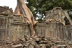 DSC_7221 (Omar Rodriguez Suarez) Tags: tree arbol temple cambodia angkor camboya
