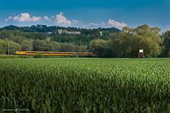 lut (dalibor.papcun) Tags: colour train slovensko slovakia sokol zsr zeleznica regiojet trebejov kostolanynadhornadom