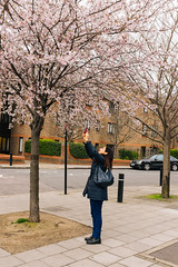 Flowers explosion! (lorenzoviolone) Tags: flowers trees england tree london spring unitedkingdom blossoms streetphotography finepix fujifilm cherryblossoms streetphoto iphone fujiastia100f fav10 mirrorless vsco vscofilm streetphotocolor fujix100s x100s fujifilmx100s travel:uk=londonapr16