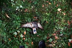 25010004 (pasha_valera) Tags: film analog 35mm death sad moscow pigeon filmcamera