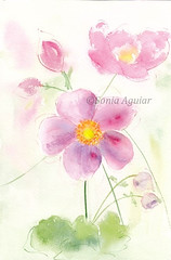 Flowers 1 (Sonia Aguiar (Mallorca)) Tags: flowers floralwatercolor flores rosadas soniaaguiar acuarela watercolor watercolour aquarell