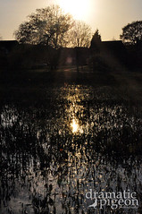 End of the Day (DramaticPigeonPhotography) Tags: sunset flooding stafford settingsun