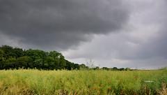 Jour de pluie (Vootch) Tags: plante ciel nuage paysage extrieur champ pelouse