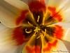 DDflowers-9