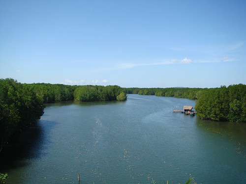 Mangrove Forest at Peam Krasop Wildlife Sanctuary