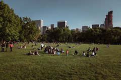 (onesevenone) Tags: park city nyc newyorkcity urban ny newyork america view unitedstates sheep centralpark manhattan lawn meadow gothamist eastcoast sheepmeadow onesevenone