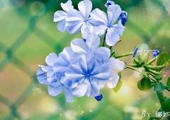 Flower (娜 娜☂Nana) Tags: life flowers light plant green love nature beautiful spring nikon colorful natural bokeh taiwan lovely 台灣 春天 台灣taiwan i bokehlicious 我愛台灣 flowersbokeh d7000