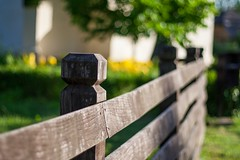 Fence Friday and the Bokeh Tree (icemanphotos) Tags: fence canon eos 350d bokeh flower flowers nature wood garden old icemanphotos