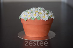 Terracotta Flower Pot Cake (zestee) Tags: flower cake daisies terracotta pot daisy flowerpot