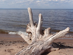 WI Point 052 (University of Wisconsin Sea Grant/Water Resources ) Tags: beach driftwood lakesuperior wisconsinpoint wisconsinseagrant shaferbeach