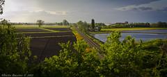 Attraverso la pianura (Alberto Baccino) Tags: alberi pianura ferrovia campi risaia coltivati