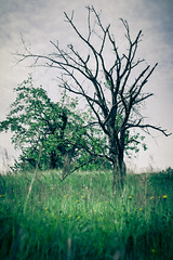 Tree (Davide Restivo) Tags: trees tree verde green slr alberi digital canon eos switzerland countryside reflex europa europe aarau campagna 7d dslr svizzera albero rombach
