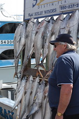 IMG_8143 (TimVidraEats) Tags: fishing florida tuna destin crabisland amberjack kingmackerel emeraldgrand chompnchill