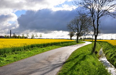 Canola Alley (powerfocusfotografie) Tags: road flowers sky green netherlands lines yellow clouds landscape alley curves crop agriculture canola henk rapeseed koolzaad rottum linesandcurves brassicanapus akkerbouw nikond90 powerfocusfotografie