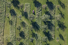 Riding Mower (Aerial Photography) Tags: trees tree by row aerial line diagonal ro bume baum fruittree luftbild diagonale alignment leaftree luftaufnahme obstbaum obb reihe tuntenhausen laubbaum deciduoustree foliagetree fotoklausleidorfwwwleidorfde 21092010 1ds56004 sindlhausen