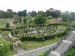 Trevor Griffiths Rose Garden