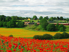 Poppy field (vgtortoise) Tags: poppies safaripark severnvalleyrailway topshot blackstonerock colorphotoaward flickrdiamond natureselegantshots panoramafotogrfico theoriginalgoldseal mygearandme mygearandmepremium mygearandmebronze mygearandmesilver mygearandmegold flickrsportal mygearandmeplatinum