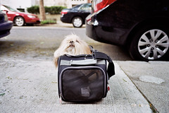 after bath (Charley Lhasa) Tags: city nyc newyorkcity urban dog ny newyork film 35mm post kodak manhattan scan neighborhood sidewalk upperwestside fujifilm charley uws argo daycamp lhasaapso petcarrier groomer lti tumbled colorplus colorplus200 kodakcolorplus200 klassew charleylhasa fujifilmklassew teafco software:adobe=lightroom file:original=jpeg camera:fujifilm=klassew digitalminilab roll:number=kw0006 folder:name=6407 image:number=6407141158 date:uploaded=120613130612 set:name=lti330419a lti:scan=330419a set:name=kw0006