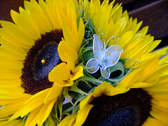 DSCF3587 (Vicky Spence) Tags: blue wedding flower yellow gardens butterfly bride alnwick northumberland sunflower bouquet bridal floralquarter