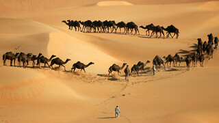 BBC记者来鸿:沙漠之舟-骆驼还是吉普?