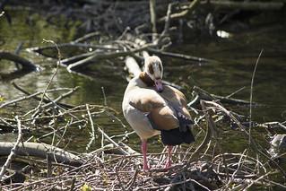 River Wandle, Beddington Park, SM6
