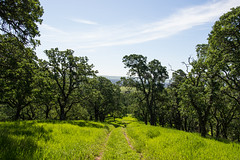 Trail - Rolling Hills Open Space Park - Solano County - California - 26 March 2016 (goatlockerguns) Tags: california park county usa mountains west tree nature oak open natural space unitedstatesofamerica vacaville hills trail bayarea eastbay solano rolling fairfield vaca